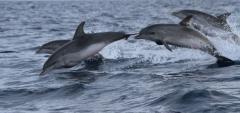 Francis Delphy, sous-marinier, aventures en mer, dauphins, écriture